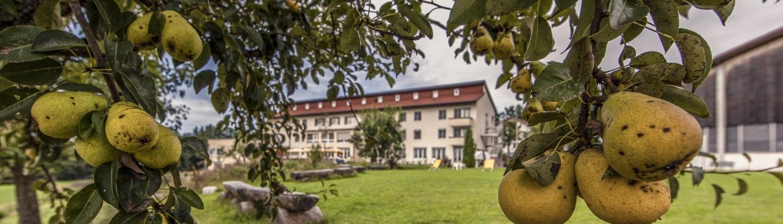Panorama-1-Seminarzentrum-Chlotisberg-Haus-durch-Birnen 1-Seminarzentrum-Chlotisberg-Haus-durch-Birnen